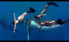 Gdzie śpiewają wieloryby