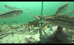 W sieci: podwodne kino akcji