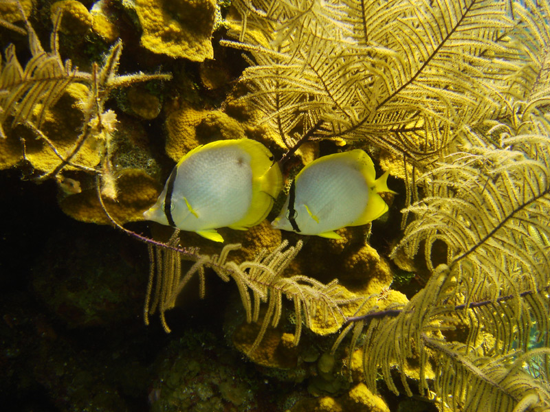 Blue Hole w Belize