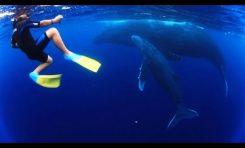 Dziecięce zabawy z wielorybami