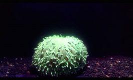 93 procent Australijskiej rafy koralowej dotknięte jest bieleniem koralowców