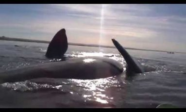 Podglądnie wieloryba