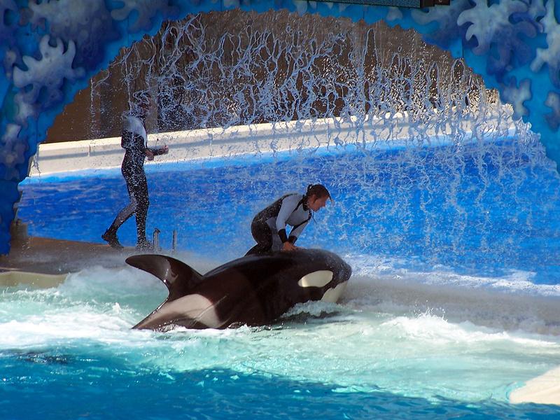 Francja wprowadza zakaz hodowli w niewoli delfinów i orek