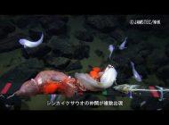Rekordowe polowanie w Rowie Mariańskim, na najgłębiej pływającą rybę