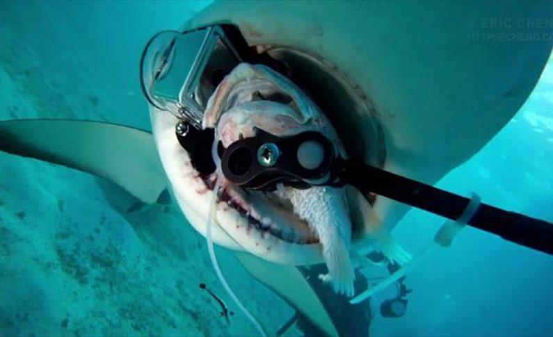 Zaglądamy do pyska rekina?