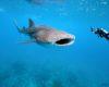 Koniec poszukiwań ropy naftowej na wodach Belize