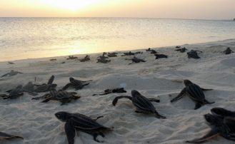 Południowo-zachodni region Republiki Dominikańskiej oazą dla przyrody