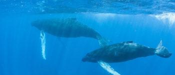 Seks wielorybów. Czy rozmiar naprawdę ma znaczenie?