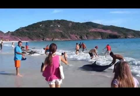 30 delfinów wypłynęło na brzeg
