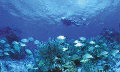 Wielka Rafa Koralowa w Australii