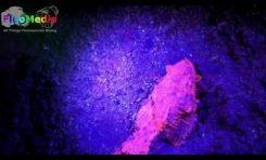Magia światła i fluorescencji