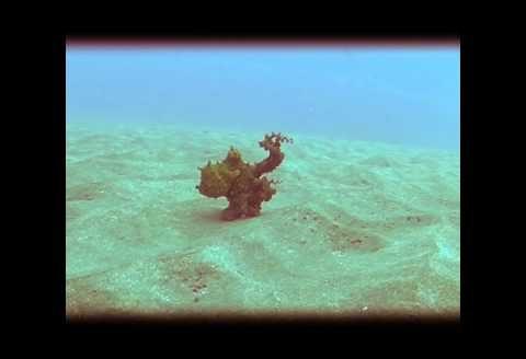Podwodny taniec ośmiornicy