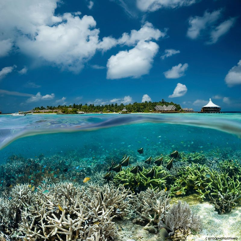 """""""Wspaniałe nurkowanie"""". Mapa miejsc do nurkowania na rafach koralowych w Indonezji"""