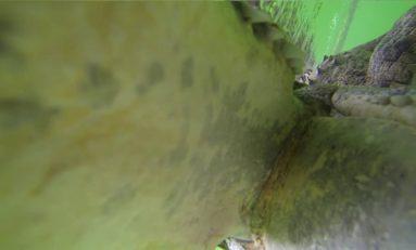 Spotkanie z krokodylem pod wodą