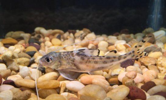 Czy ryby czują płetwami?