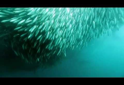 Na nurkowanie do bogatych wód RPA