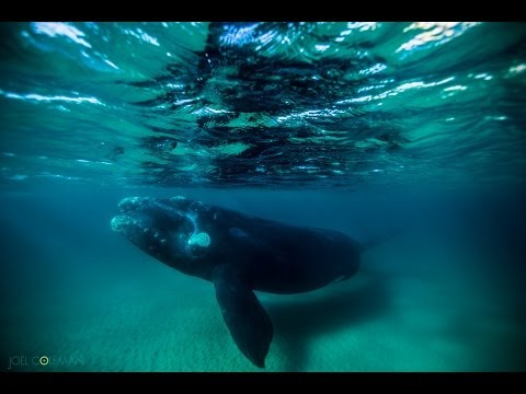 Nietypowa sesja z wielorybem