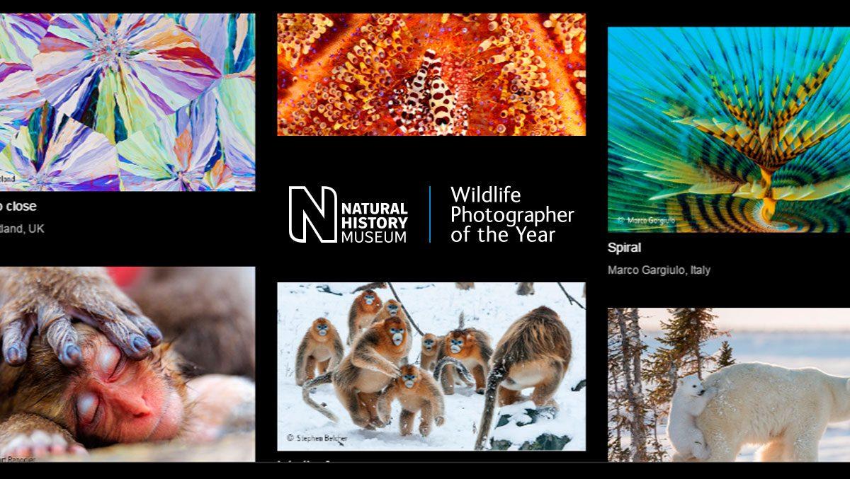 Wildlife Photographer of the Year 2017 – głosowanie trwa