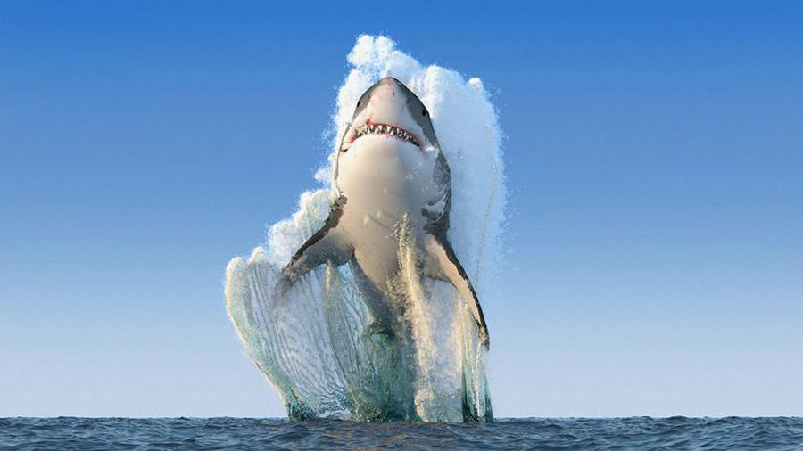 Czy zdjęcie rekina jest prawdziwe?