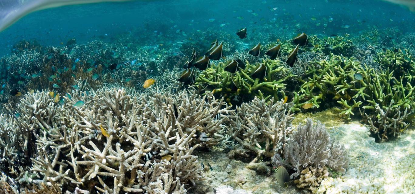 Największa rafa koralowa Japonii została zniszczona.