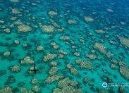 Wielka Rafa Koralowa zagrożona baardziej niż przewidywali naukowcy