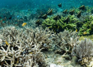 BP planuje wydobycie ropy naftowej w pobliżu rafy koralowej Amazonki