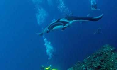 Czy zwierzęta słyszą nas pod wodą?