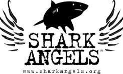 Aukcje na rzecz ratowania rekinów w ramach Światowego Dnia Oceanów