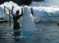 Sanktuarium wodne dla waleni