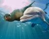 Czy delfiny są najlepszymi freediverami na świecie?
