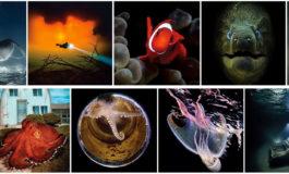 Wyniki konkursu fotograficznego Scuba Diving