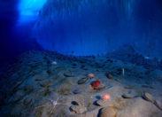 Nurkujące roboty odkrywają wcześniej niedostępne dane z Oceanu Południowego na temat dwutlenku węgla