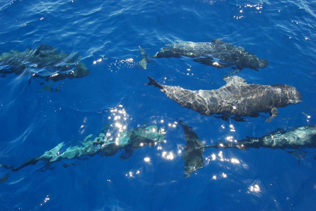 Czy wieloryby mają menopauzę?