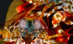 Nowa technika podwodnej geolokalizacji czerpie inspiracje z natury
