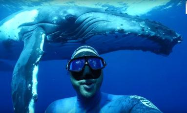 Podwodne selfie z wielorybem