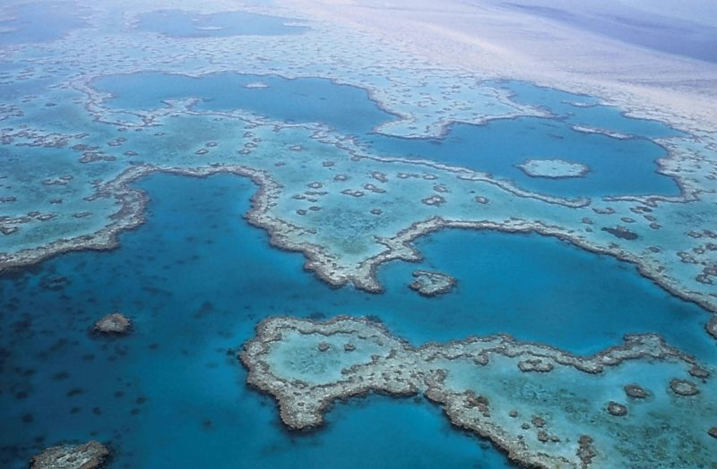 Czy autonomiczne roboty, niczym bociany, uratują Wielką Rafę Koralową Australii?