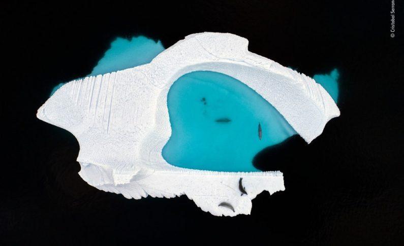 Basen lodowy - Cristóbal Serrano, Hiszpania. Zwycięzca w kategorii: Wizje kreatywne.