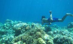"""""""Morscy Koczownicy"""" - ewolucyjnie przystosowani do freedivingu"""