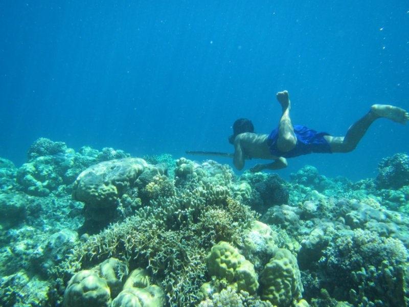 """""""Morscy Koczownicy"""" – ewolucyjnie przystosowani do freedivingu"""