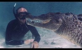 Freediving w towarzystwie wielkich krokodyli