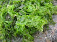 Przełom w produkcji bioplastiku przyjaznego środowisku