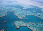 Naukowcy zwracają się do ludzi o pomoc w ratowaniu Wielkiej Rafy Koralowej