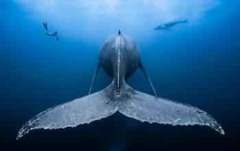 Najpiękniejsze fotografie podwodne Ocean Art zostały wybrane