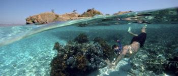 Szkodliwy wpływ niektórych składników filtrów słonecznych na życie morskie