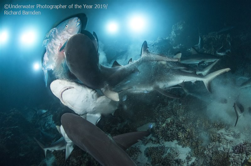Ogłoszono wyniki konkursu na Podwodnego Fotografa roku 2019