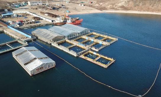 Jean-Michel Cousteau współpracuje z Rosją w ramach pomocy dla uwięzionych waleni i orek