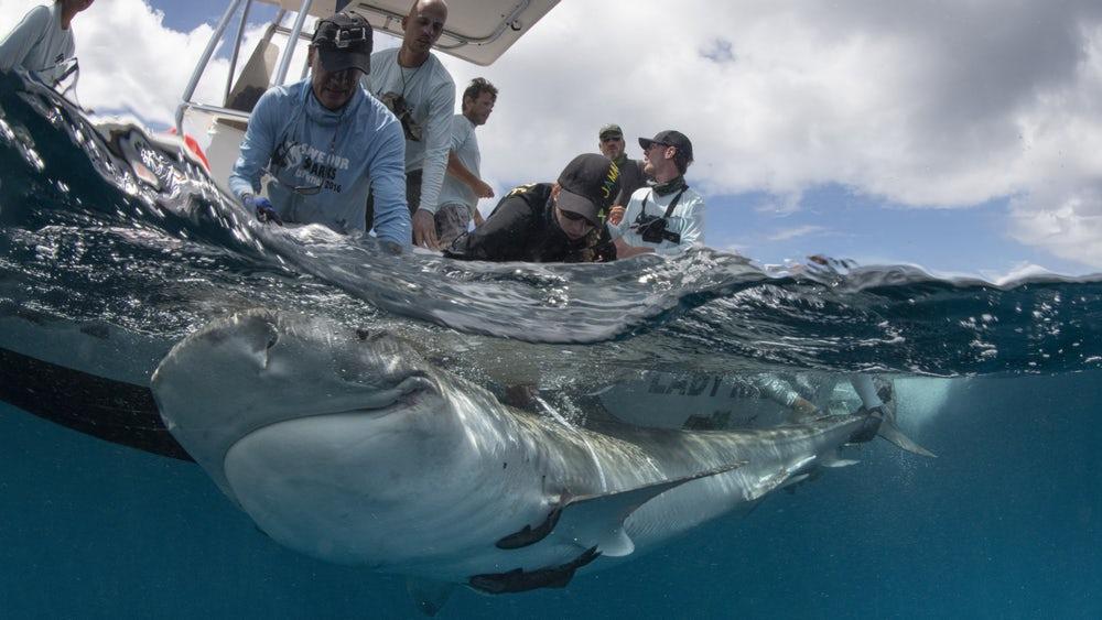 Nowe znaczniki do śledzenia migracji zwierząt morskich
