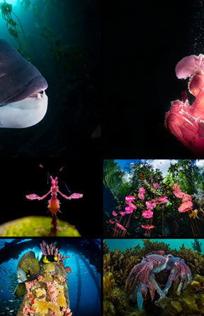 """Podsumowanie konkursu fotograficznego """"Think Pink"""""""
