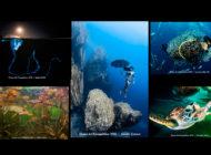 """Ruszyły zgłoszenia do konkursu fotografii podwodnej """"Ocean Art"""" 2019"""