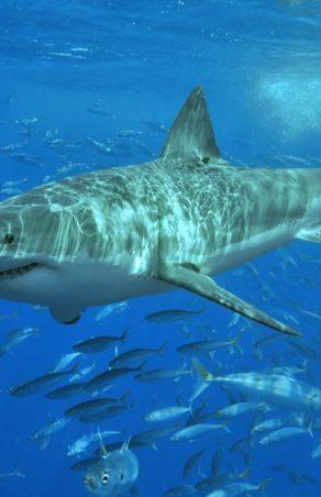 Stworzenie szczepionki na Covid-19 może przyczynić się do śmierci pół miliona rekinów